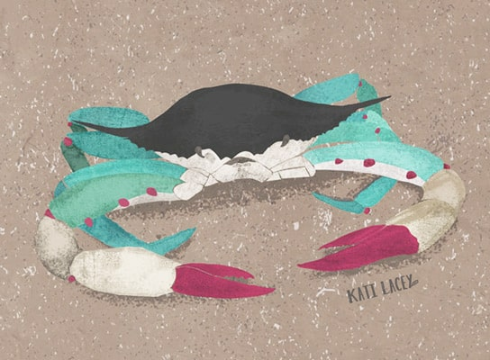 animal-illlustration-art-drawig-pet-marine-sealife-alphabet-kids-children-textures-sea-crab
