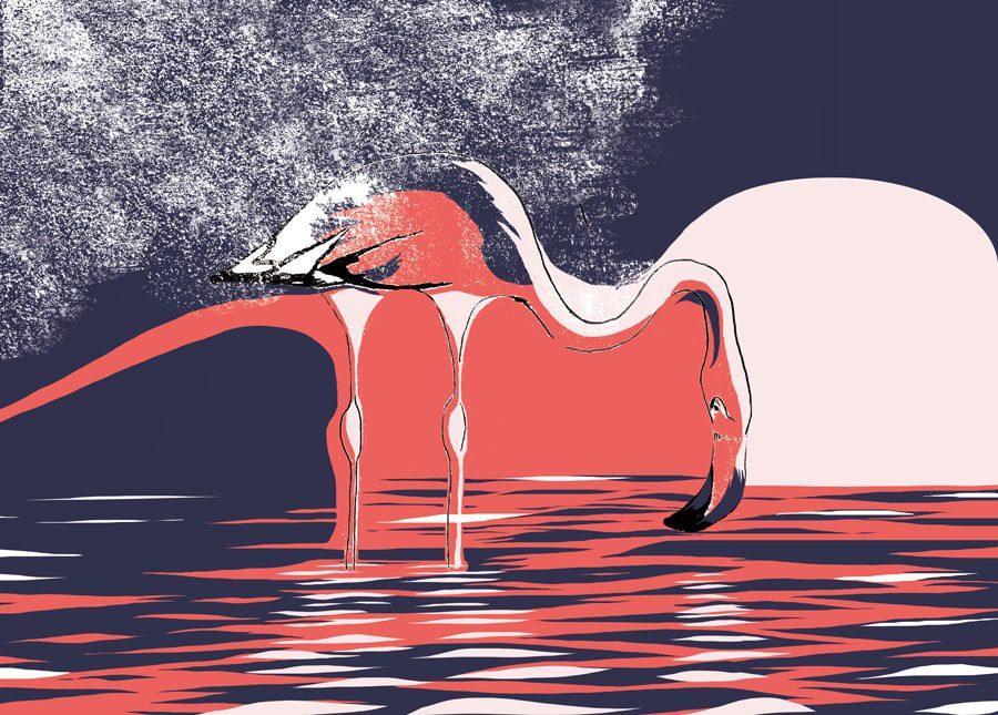 kati-lacey-editorial-illustration-magazine-solo travel-single-flamingo-water-purple-pink-biro-animalillustration-illustration-wildlife-illustrtor