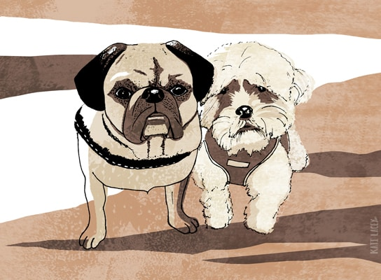 dog-portraits-pet-pets-katilacey-illustration-bespoke