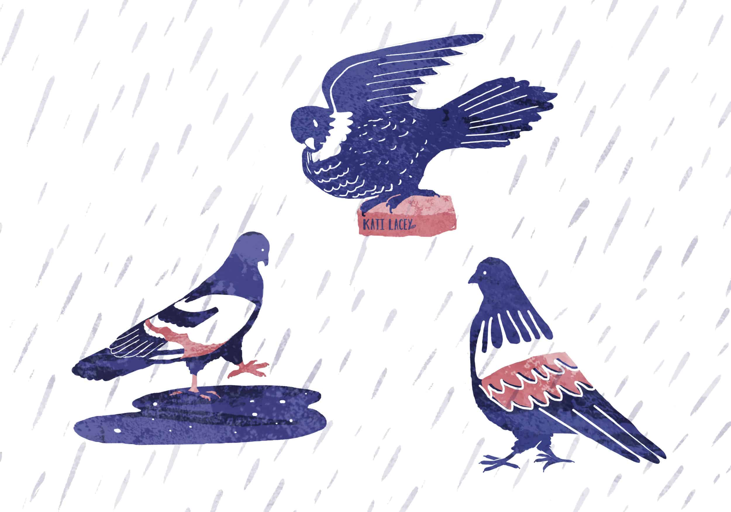 pigeons bathing showering in the rain washing armpits illustration blue and pink katilacey freelance illustrator moments of joy